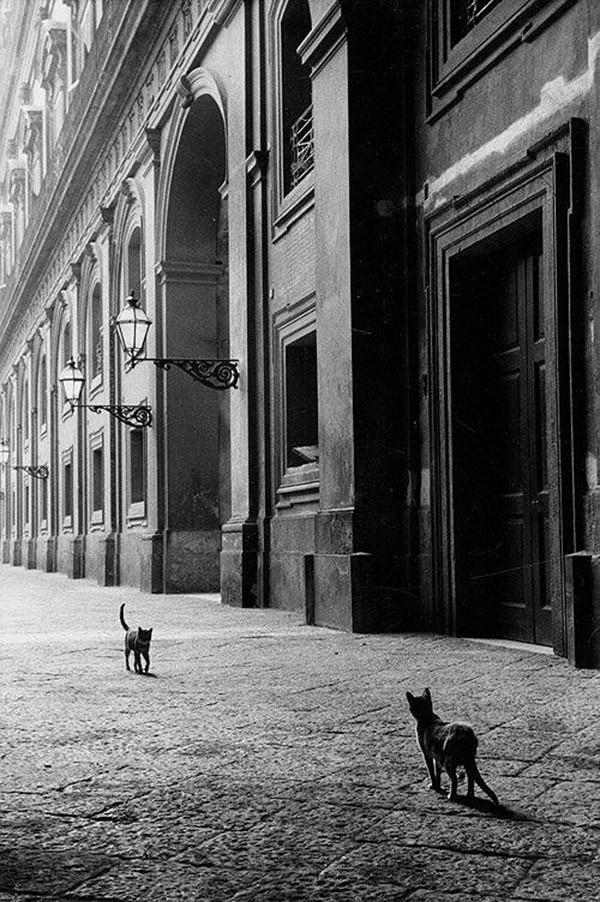 50 черно-белых снимков от мастеров фотографии