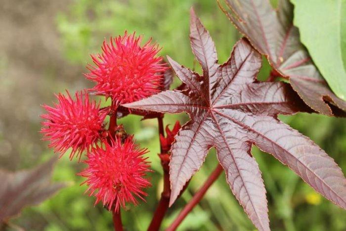 Растения, которые не стоит сажать на даче