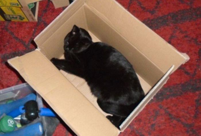 Примеры бесконечной любви кошек и коробок
