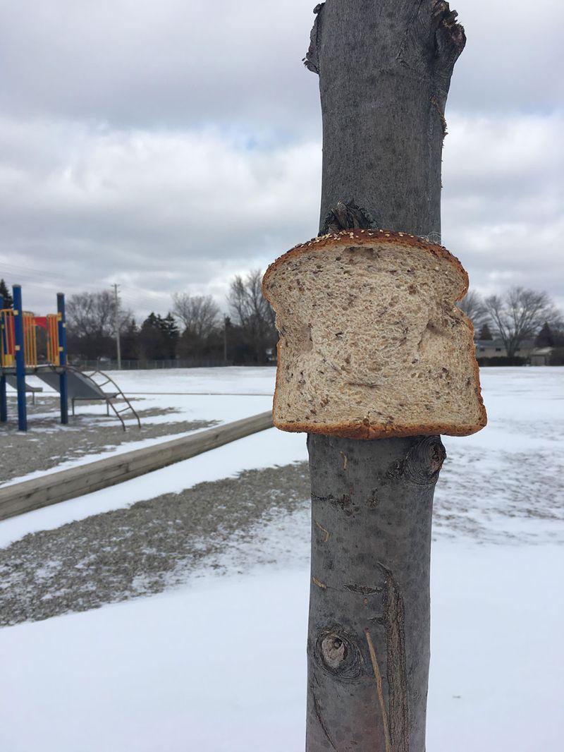 Странный хлеб, прикреплённый к дереву