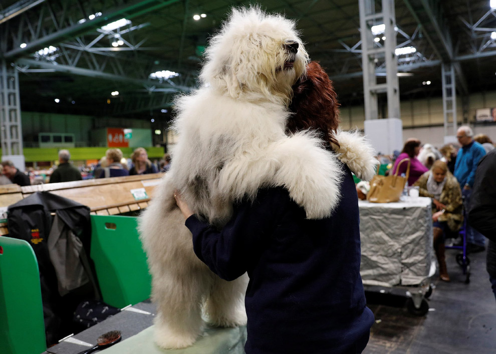Crufts Dog Show 2018: крупнейшая в Европе выставка собак