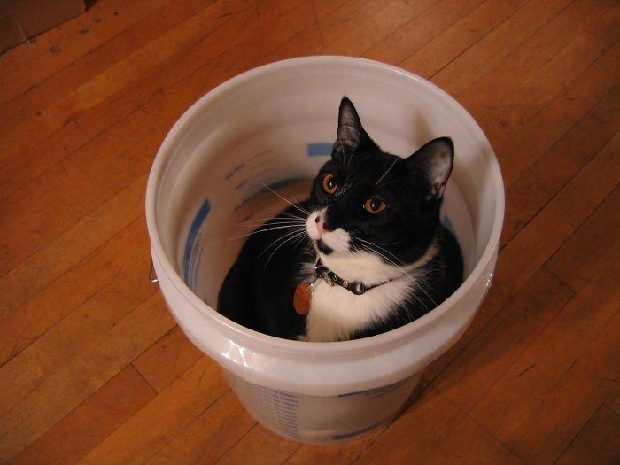 Кошек не интересуют наши правила