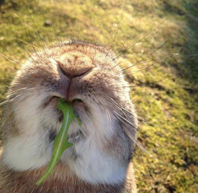 Забавные жующие кролики
