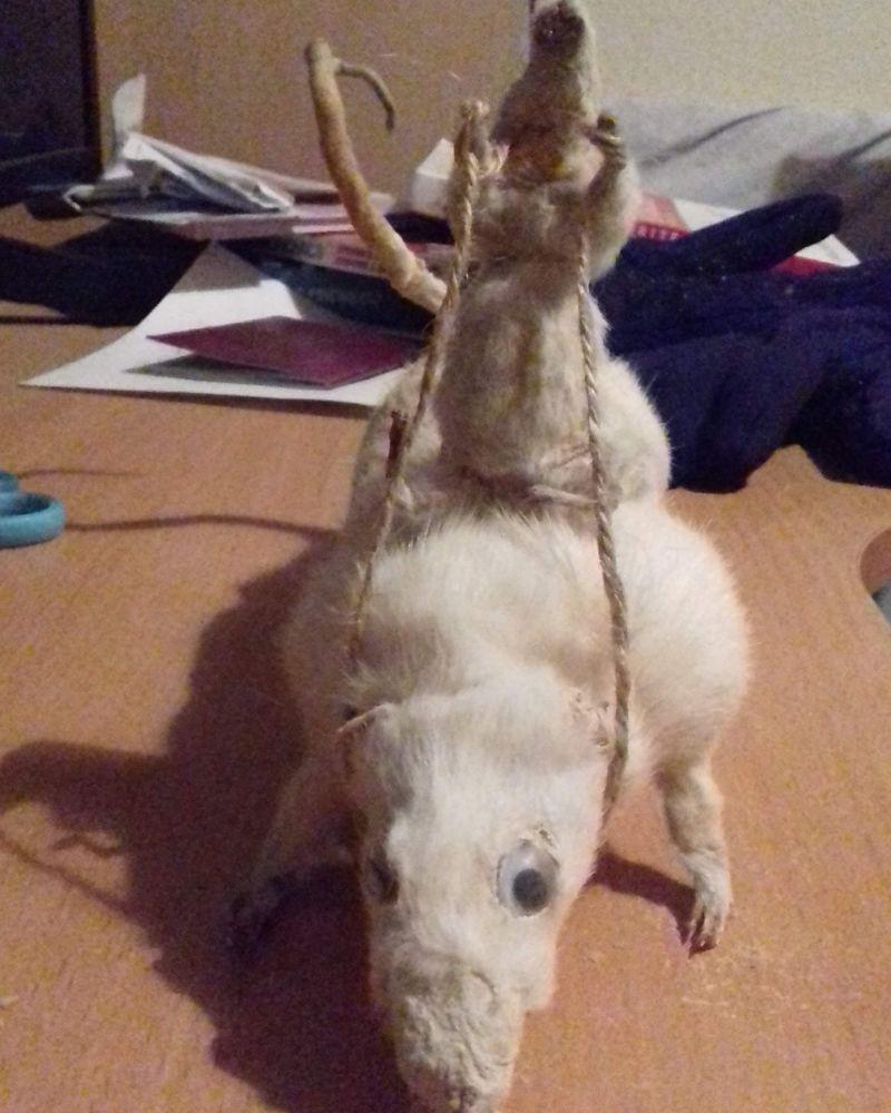 Безумные поделки из животных от таксидермиста Джека Девани