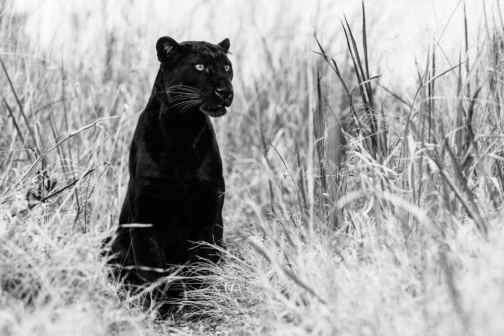 Истории культовых кадров знаменитого фотографа дикой природы