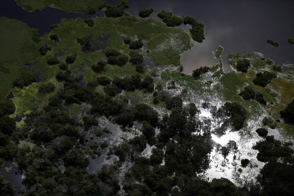 Ягуары, спасаясь от наводнений, переселились на деревья