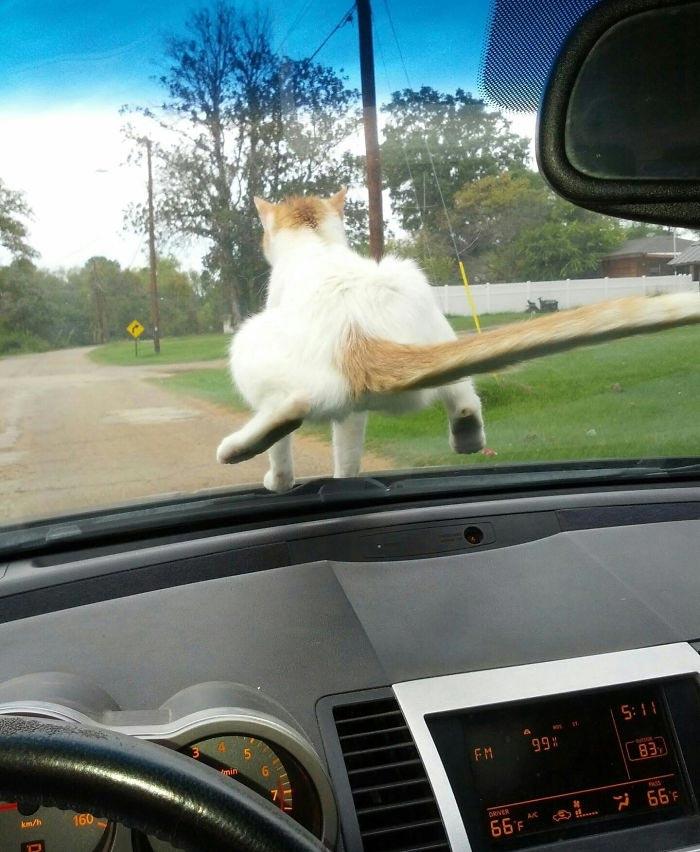 Эти фотографии доказывают, что кошки могут быть засранцами