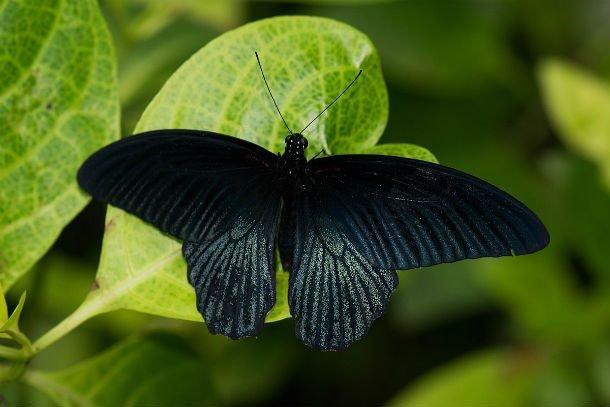 Красота и великолепие бабочек