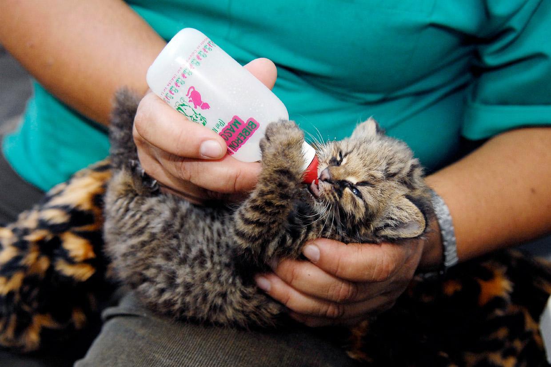 Как работает скорая помощь для животных