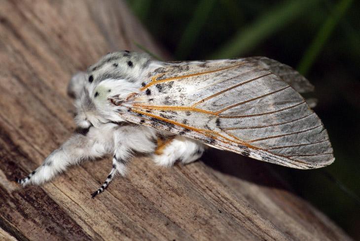 Прекрасные бабочки и их гусеницы