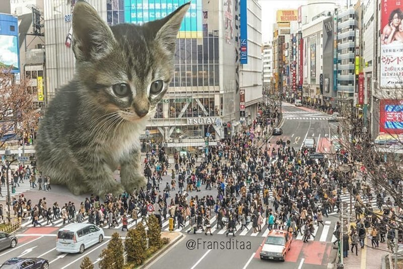 Гигантские кошки в городских ландшафтах