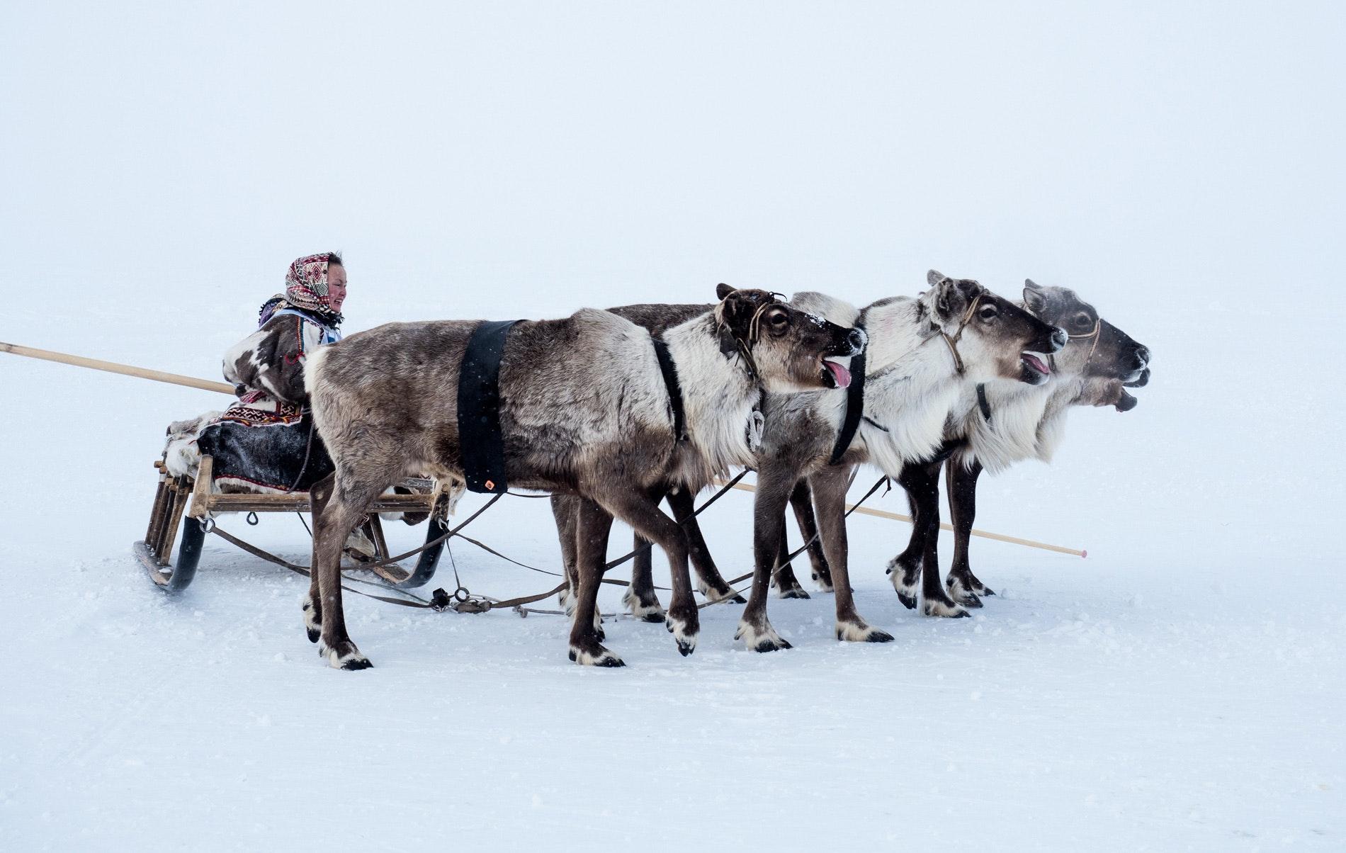 Жизнь сибирских ненцев на снимках Камиля Нуреева