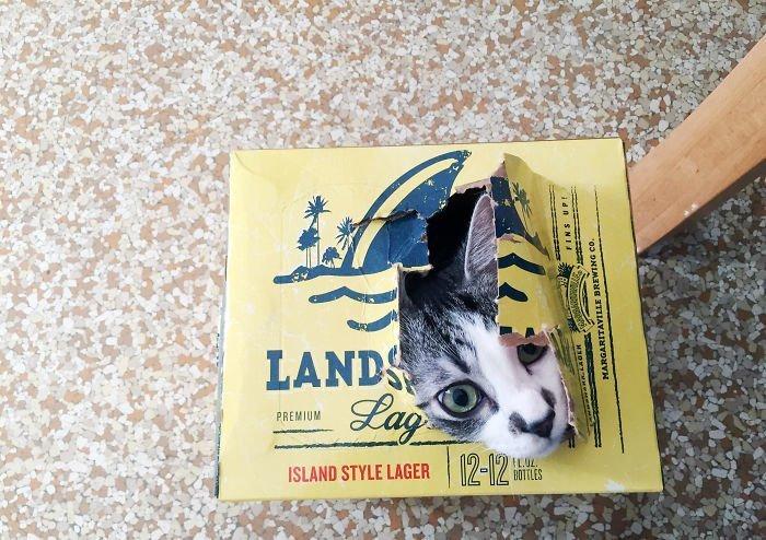 22 кота в коробках и укромных местах