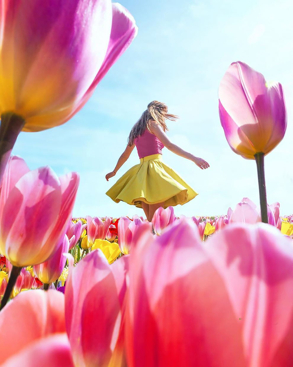 Цветущие поля тюльпанов в Нидерландах