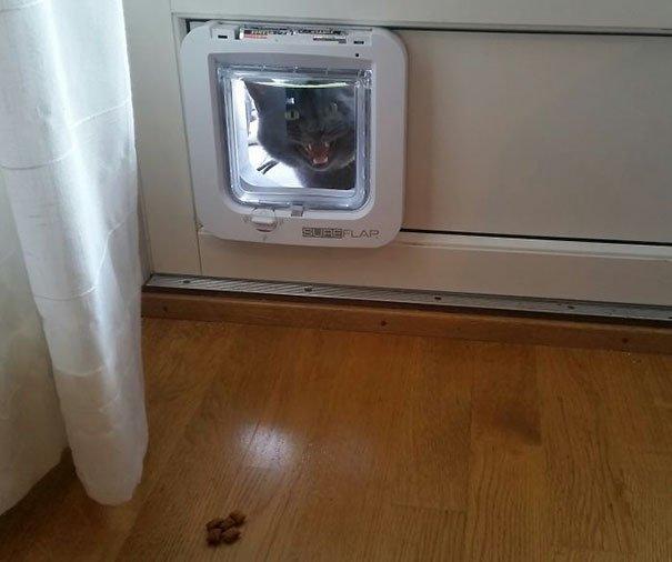 Забавные кошки, которые попали в глупые ситуации