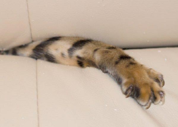 Кошки застряли в диванах