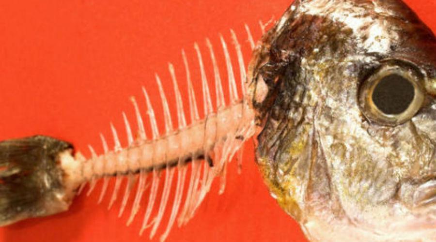Как вытащить застрявшую в горле кость от рыбы