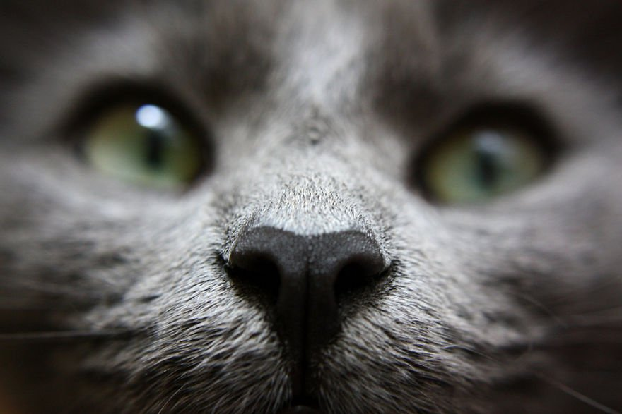 Милые кошачьи носики в кадре