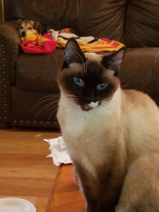 Кошки с необычным окрасом заряжают позитивом