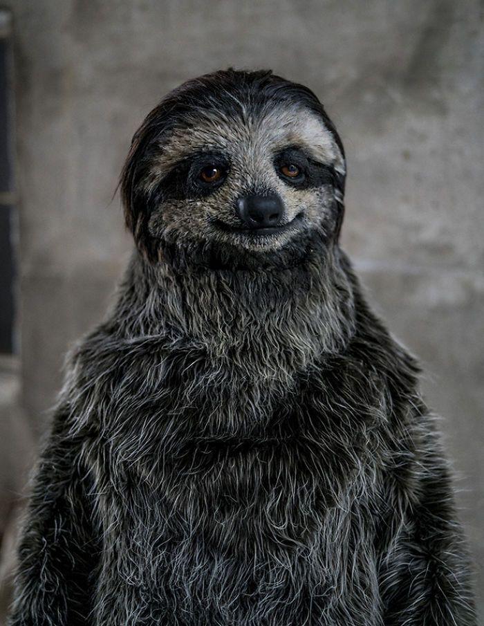 Максимально реалистичный костюм ленивца