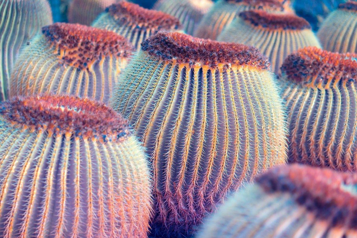 Инфракрасные макрофотографии растений Канарских островов