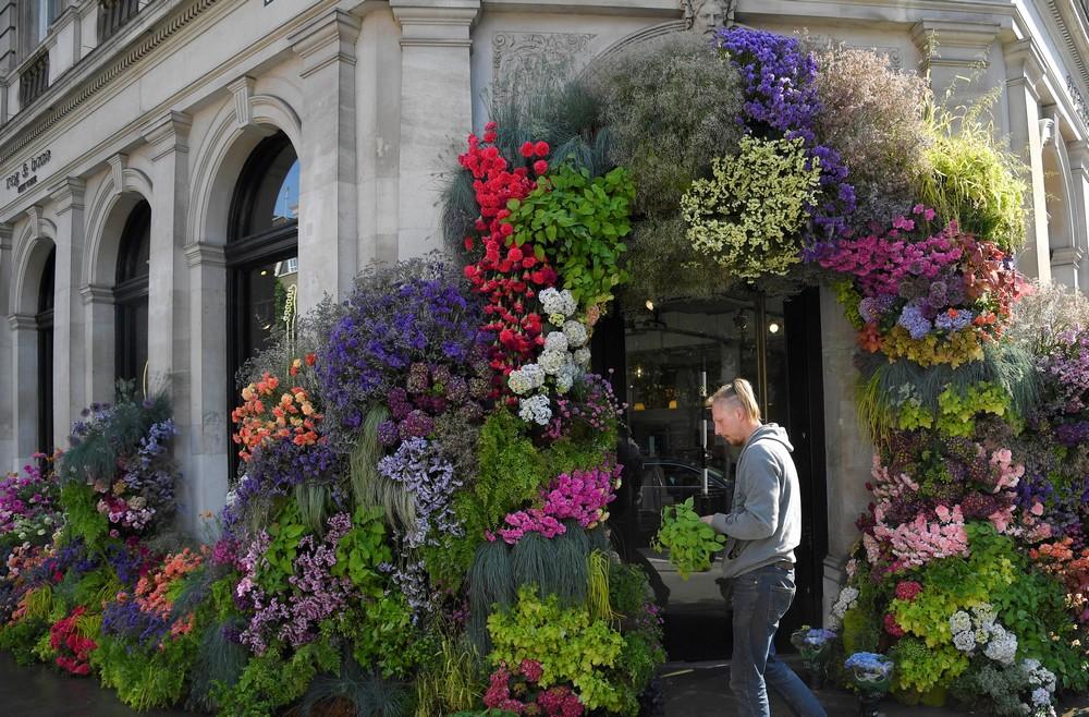 Фестиваль цветов в Лондоне 2018