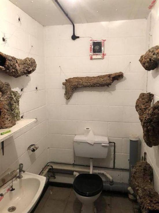 Паучий туалет из кошмарных снов