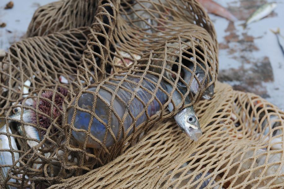 Рыбаки помогают очистить море от пластиковых отходов