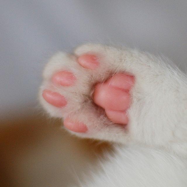 Милые кошачьи лапки