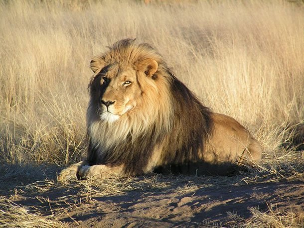 25 животных, которые могут легко убить человека