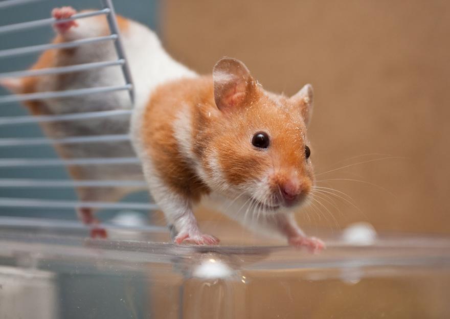 Милые пушистые хомячки заряжают позитивом