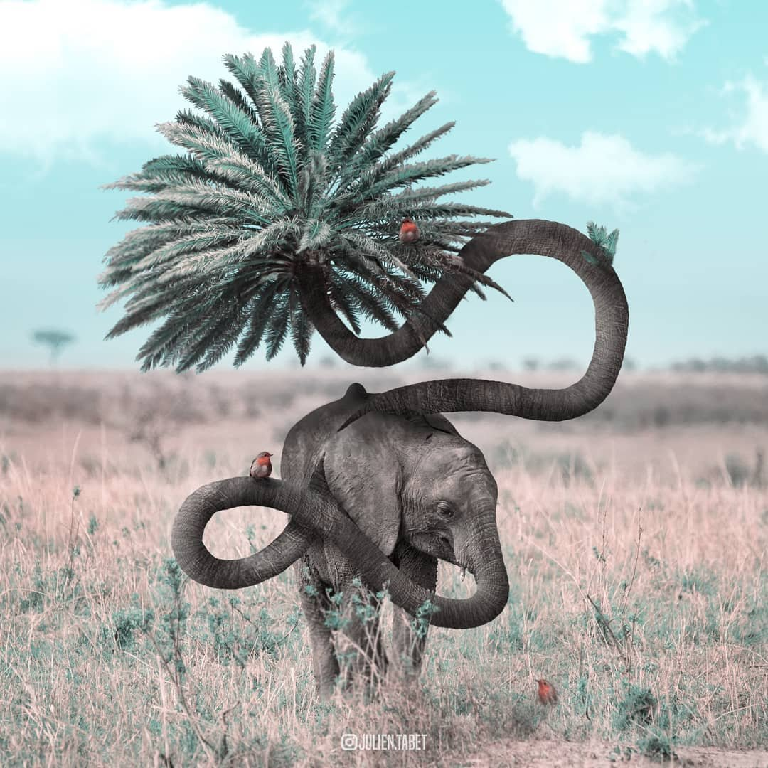 Сюрреалистические фотоманипуляции с животными от Жульена Табе