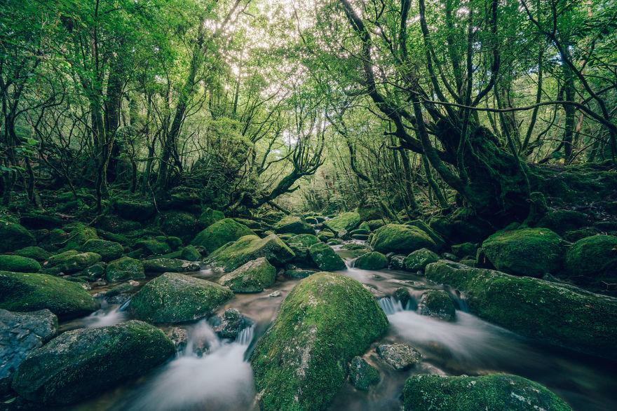 Древние леса острова Якусима на снимках Юичи Йокота