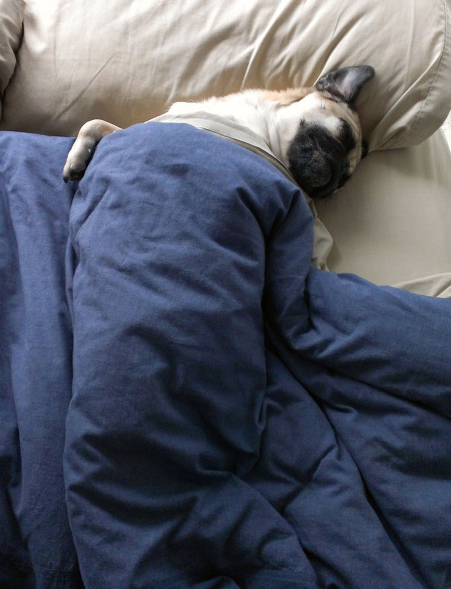 Собаки улеглись и спят в кроватях своих хозяев