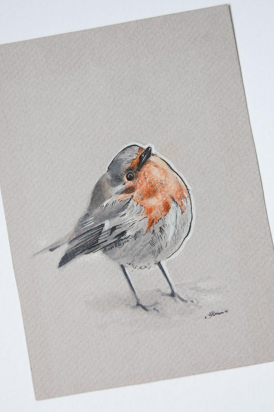 Птицы на рисунках Симона Захгубера