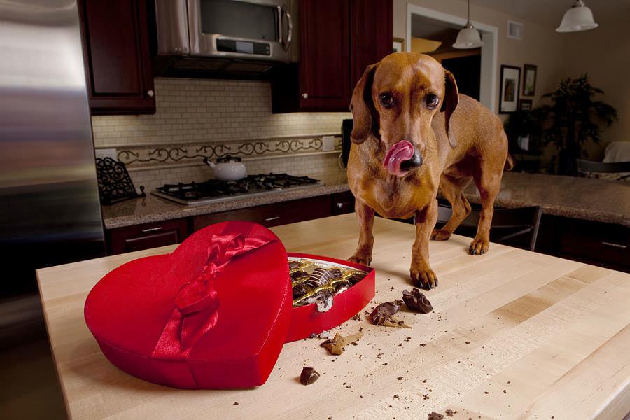 Что следует знать владельцам собак