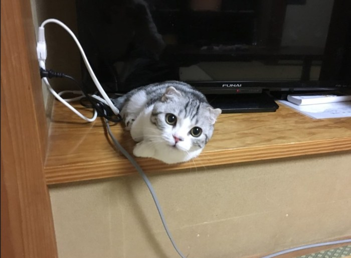 В небольшом японском отеле можно взять кота в аренду