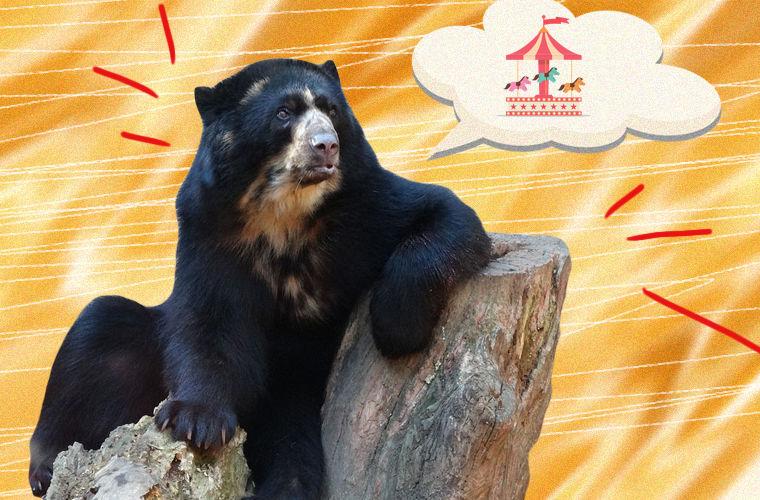 Курьезные случаи побегов животных из зоопарков