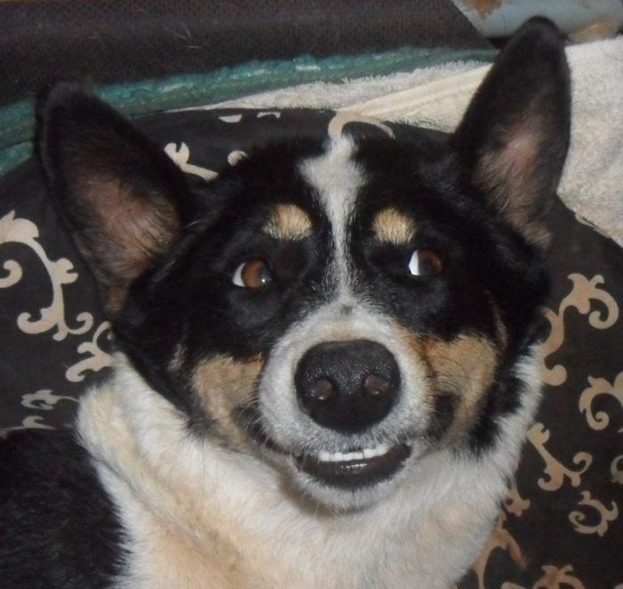 Смешные собаки, которые ведут себя как люди