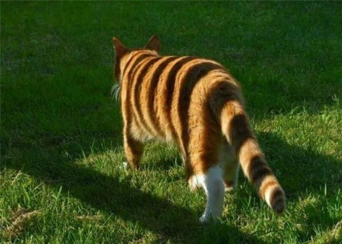 Забавные оптические иллюзии и обман зрения