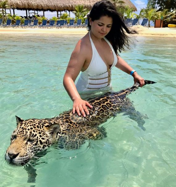 Купание с ягуарами в Карибском море
