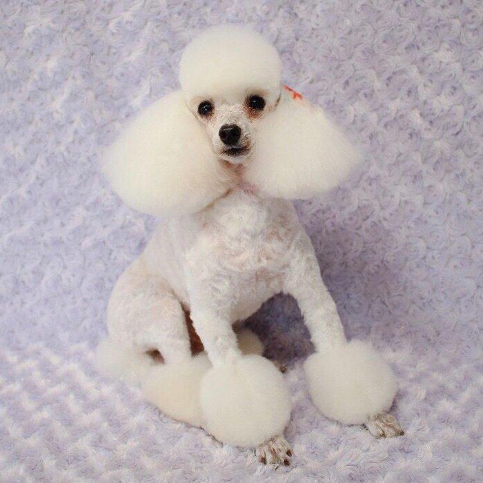 Очаровательные собачьи стрижки от умелого японского грумера