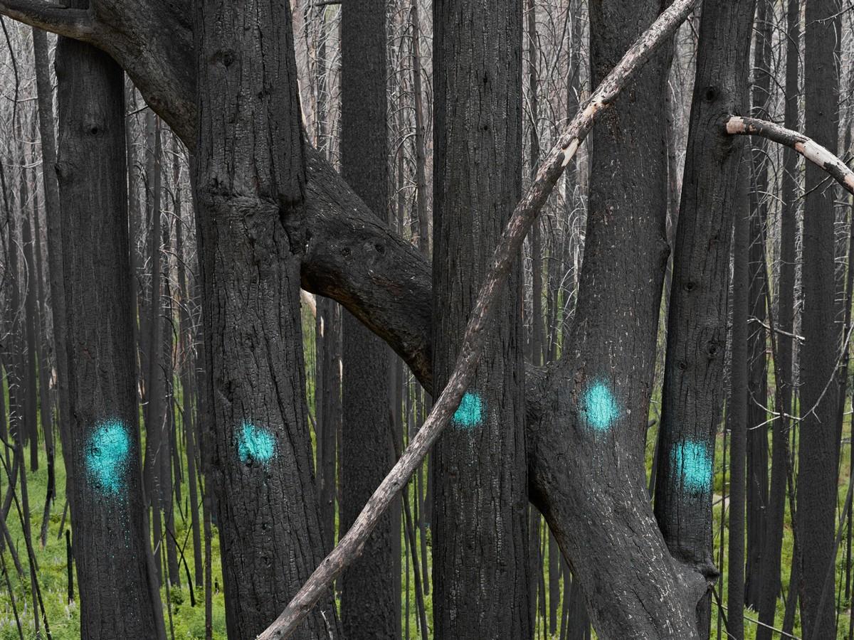 Проект Человеческая природа от Лукаса Фоглиа