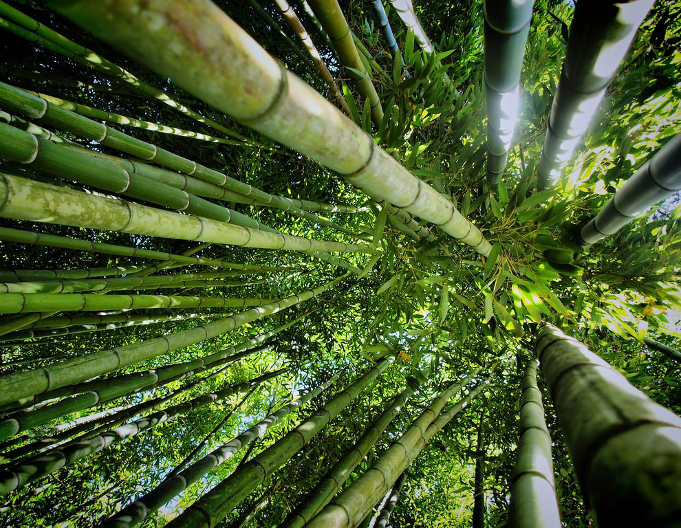 Прогулка по знаменитой бамбуковой роще в Киото