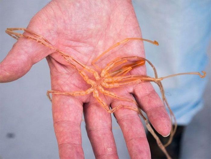 10 необычных существ, которые обитают у побережья Австралии