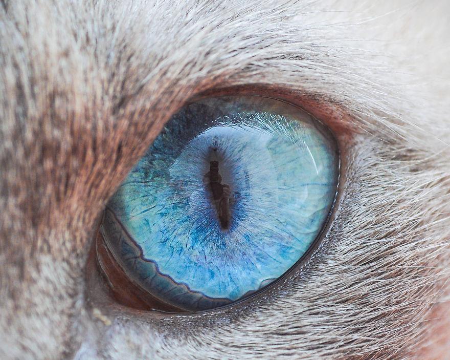 утвержден посту бирюзовый цвет глаз у кошек фото сказаниях