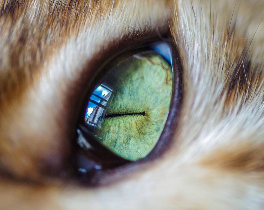 Серия фотографий кошачьих глаз Cat Eye