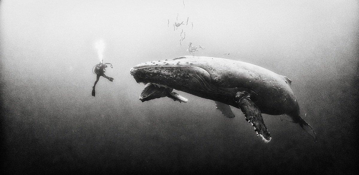 Красота подводного мира на чёрно-белых фотографиях