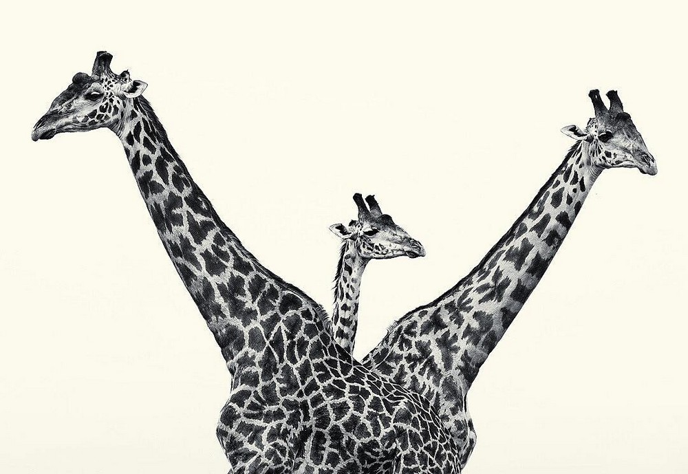 Дикие животные в объективе Ли Фишера