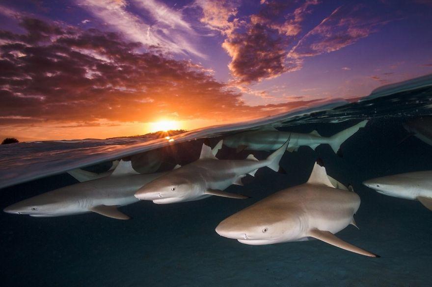 Победители конкурса подводной фотографии 2018